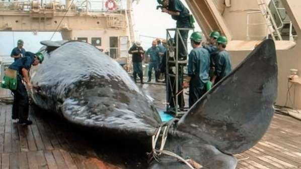 chasse-baleine-japon