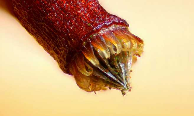 Small-World-Photomicrography-Competition_4